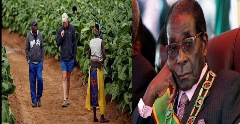 Le Zimbabwe indemnise les fermiers blancs dont les terres ont été saisies par Robert Mugabe