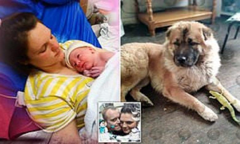 Angleterre: un nouveau-né mutilé à mort par le chien de famille