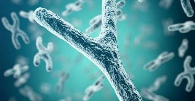 Étude : les hommes pourraient disparaître car le chromosome Y est entrain de s'éteindre