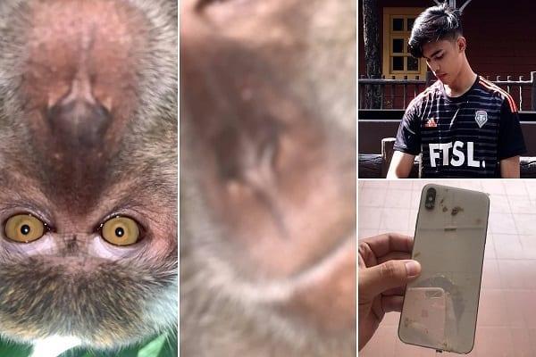 Malaisie : un singe vole un téléphone et se fait des selfies