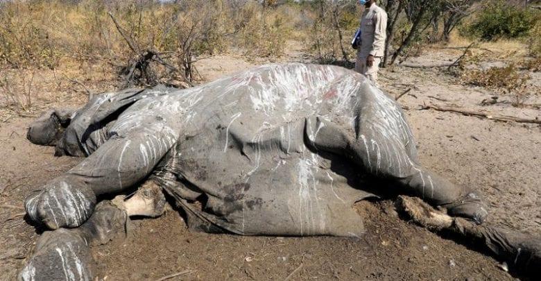 Zimbabwe : plusieurs éléphants meurent mystérieusement non loin d'un parc