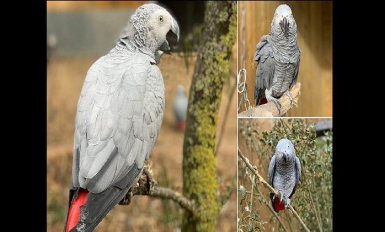 Angleterre : 5 perroquets expulsés d'un parc pour s'être moqués et avoir insulté des visiteurs