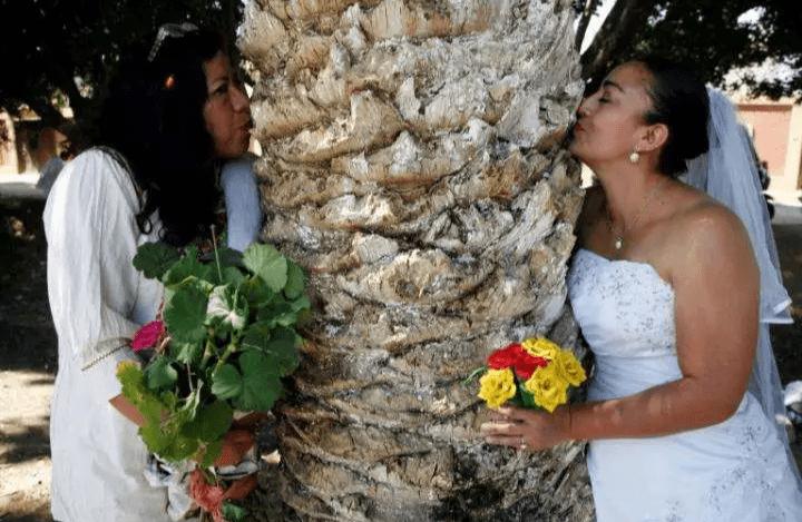 Insolite : Une femme se marie avec un arbre