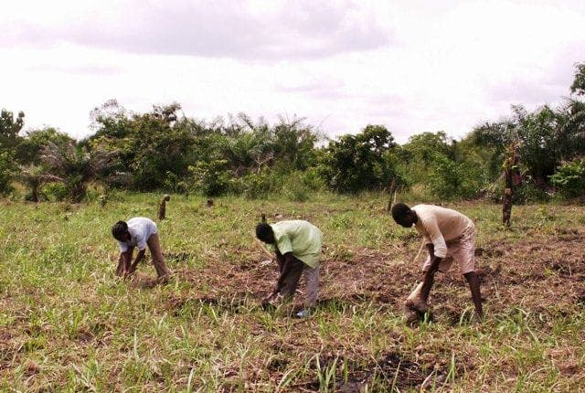 Togo : Des Chinois achètent 1000 hectares