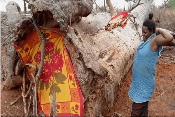 Kenya: abandonnée par le père de ses enfants, elle trouve refuge dans un arbre (photos)