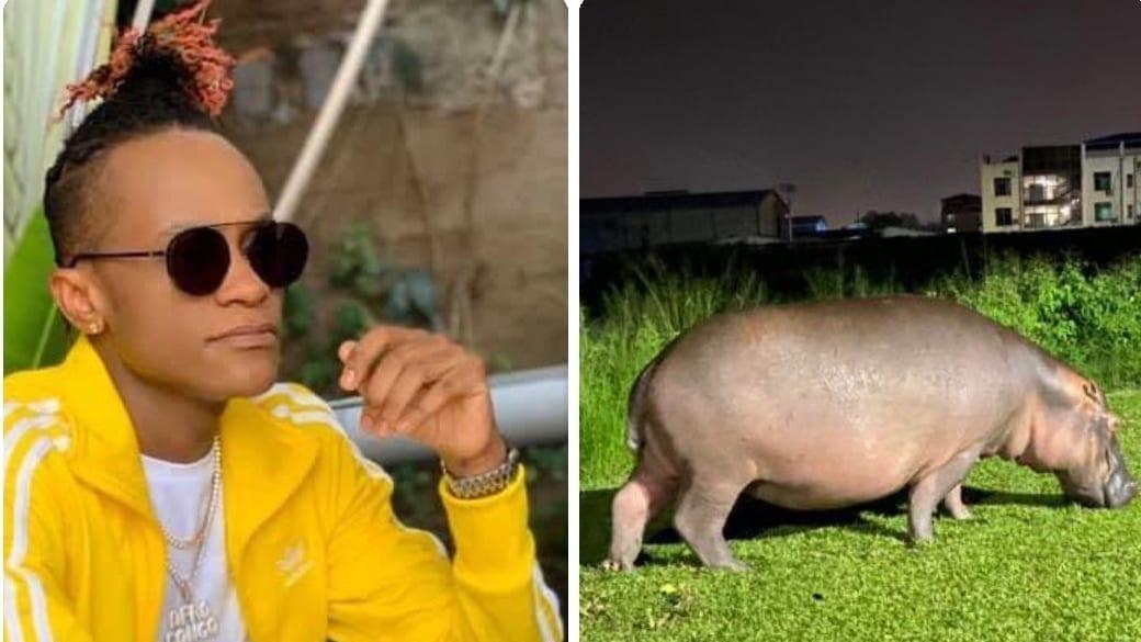 Cité du Fleuve :Innoss'Ba des hippopotames comme voisins
