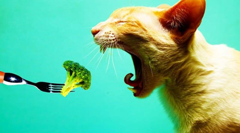 Le chat peut-il être vegan ?