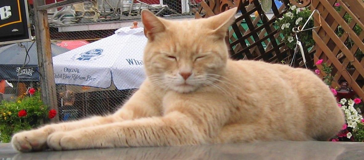 Stubbs : L'histoire d'un chat élu maire