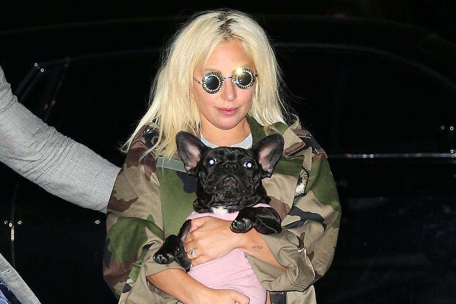 Lady Gaga promet plus de 200 millions de F CFA à celui qui va retrouver ses chiens