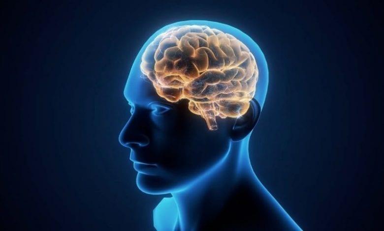 Santé: voici quelques procédés pour empêcher le vieillissement du cerveau
