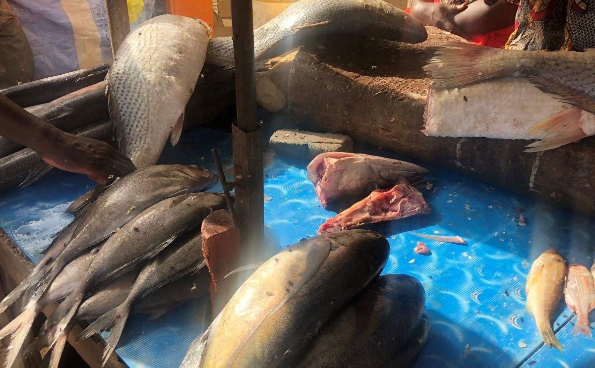 Ramadan au Sénégal : quand le poisson se fait rare et cher