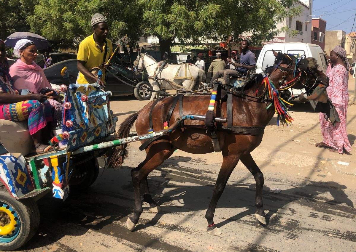 La calèche nourrit-elle toujours son homme au Sénégal ?